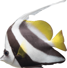 light-yelow-white-gray-fish