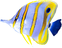 texture-light-blue-and-yelow--fish