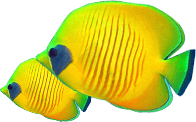 texture-yellow-blue-fish